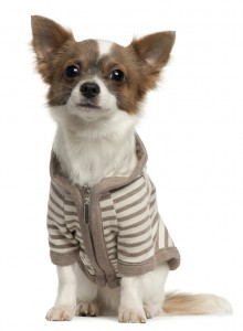 Puppy_sweater